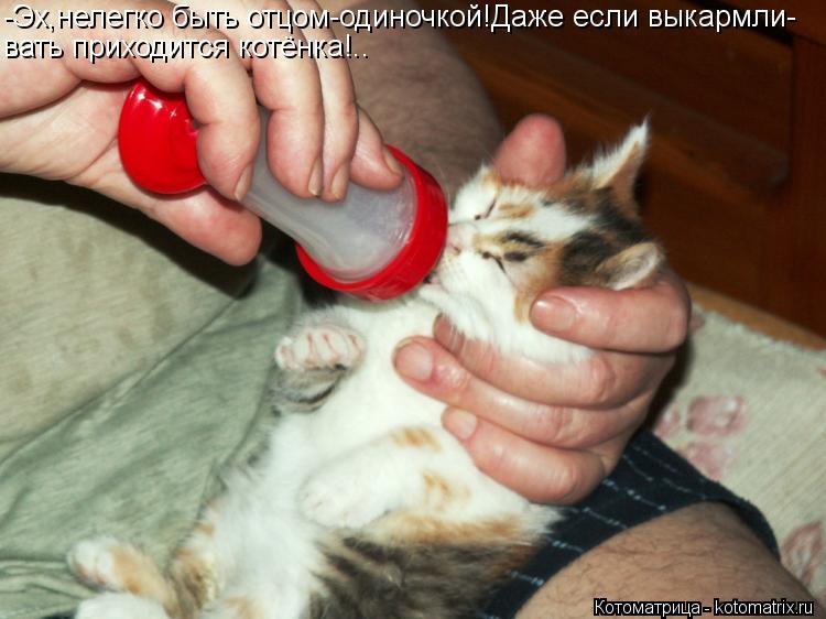 Котоматрица: -Эх,нелегко быть отцом-одиночкой!Даже если выкармли- вать приходится котёнка!..