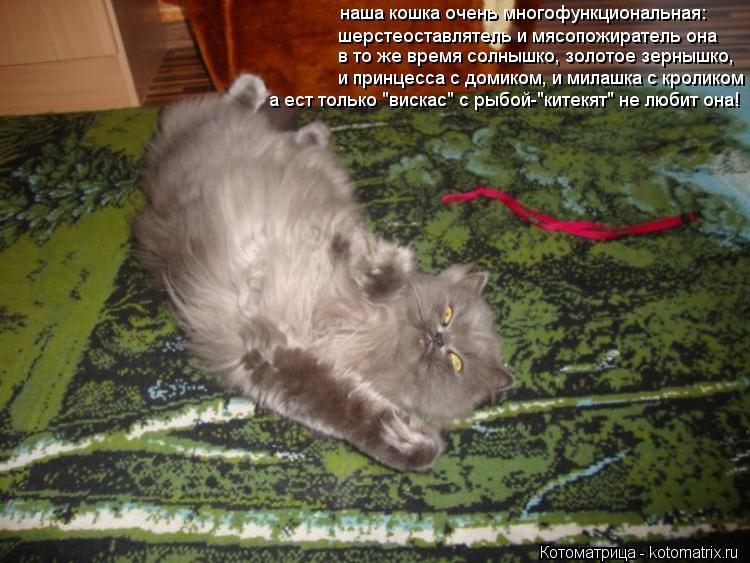 Котоматрица: наша кошка очень многофункциональная: шерстеоставлятель и мясопожиратель она в то же время солнышко, золотое зернышко, и принцесса с домик