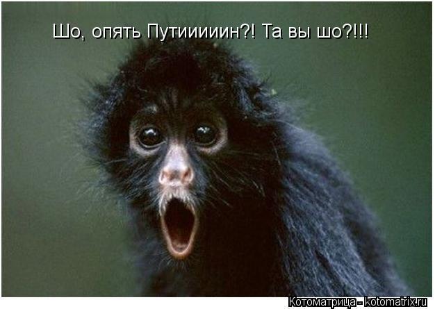 Котоматрица: Шо, опять Путииииин?! Та вы шо?!!!