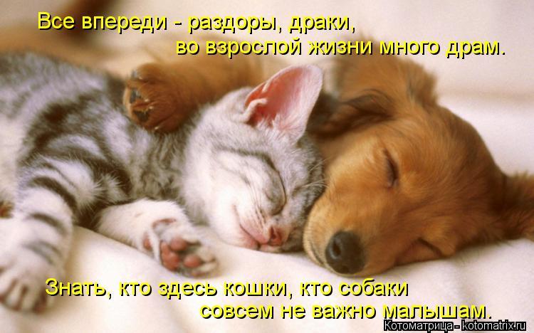 Котоматрица: Все впереди - раздоры, драки, во взрослой жизни много драм. Знать, кто здесь кошки, кто собаки совсем не важно малышам.