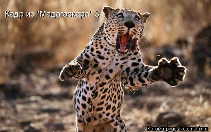 """Котоматрица: Кадр из """"Мадагаскара"""" 3"""