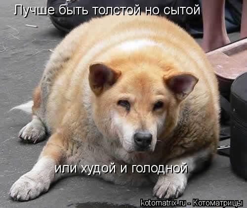 Котоматрица: Лучше быть толстой но сытой  или худой и голодной