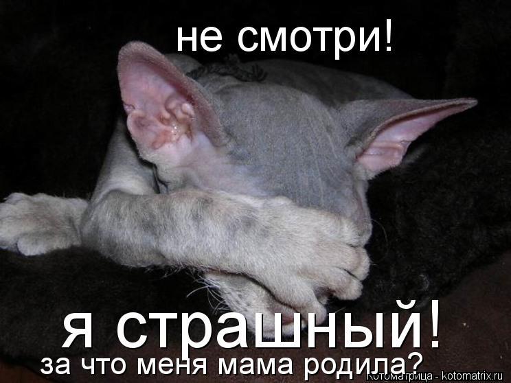 Котоматрица: не смотри! я страшный! за что меня мама родила?