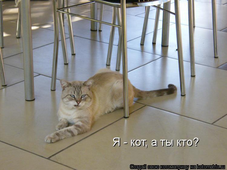 Котоматрица: Я - кот, а ты кто?