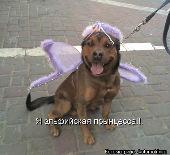 Котоматрица: Я эльфийская прынцесса!!!