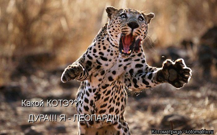 Котоматрица: Какой КОТЭ??? ДУРА!!! Я - ЛЕОПАРД!!!