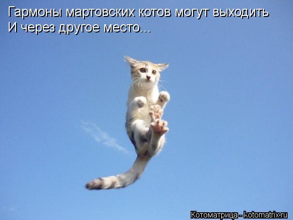 Котоматрица: Гармоны мартовских котов могут выходить  И через другое место...
