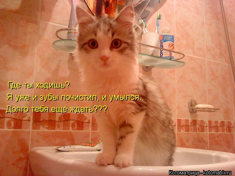 Котоматрица: Где ты ходишь? Я уже и зубы почистил, и умылся... Долго тебя ещё ждать???