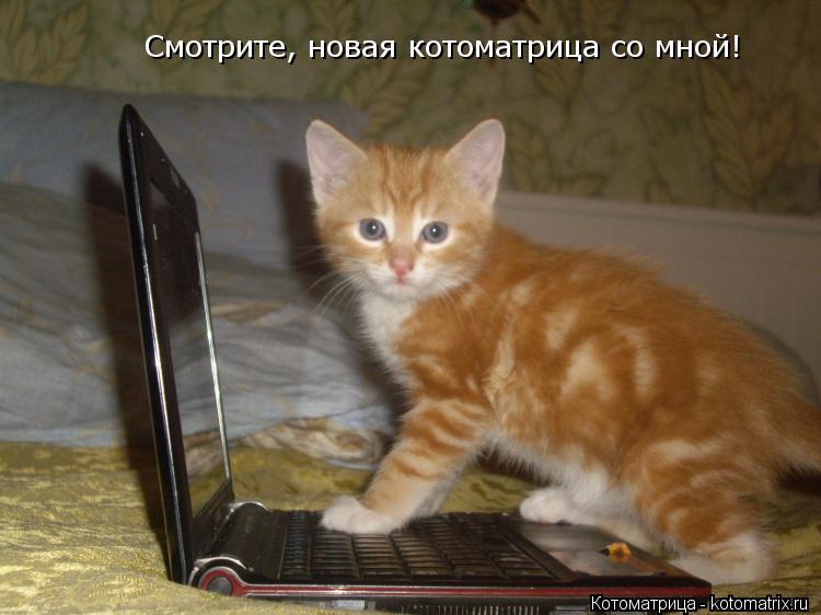 Котоматрица: Смотрите, новая котоматрица со мной!