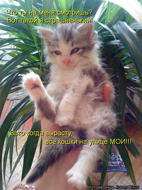 Котоматрица: Вот такой я страшненький! Зато когда вырасту, Что ты на меня смотришь? все кошки на улице МОИ!!!