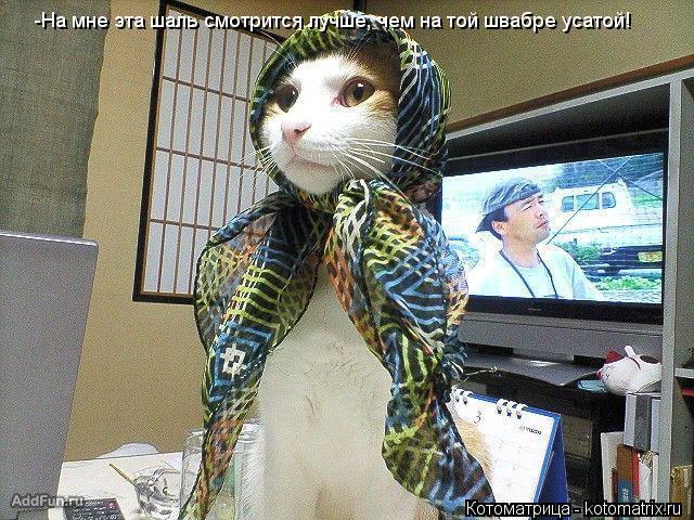 Котоматрица: -На мне эта шаль смотрится лучше, чем на той швабре усатой!