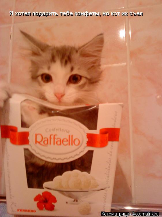 Котоматрица: Я хотел подарить тебе конфеты, но кот их съел