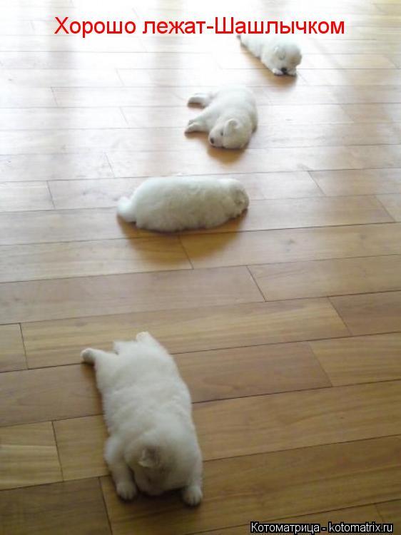 Котоматрица: Хорошо лежат-Шашлычком