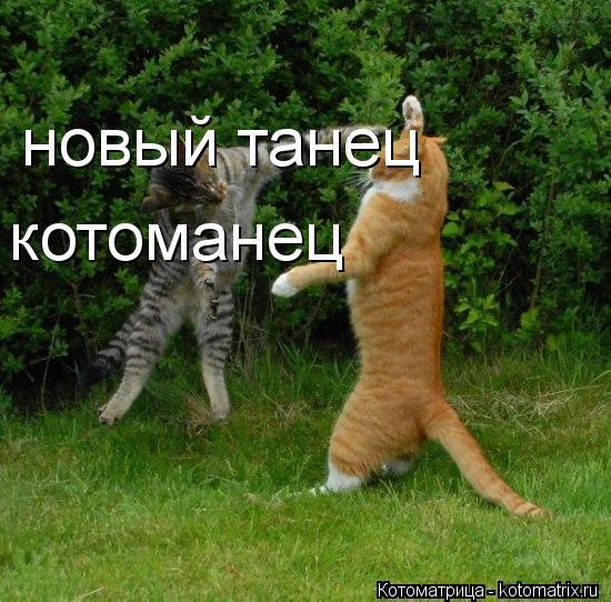Котоматрица: новый танец новый танец котоманец