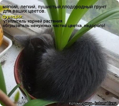 Котоматрица: мягкий, легкий, пушистый,плодородный грунт  для ваших цветов. функции: утеплитель корней растения обгрызатель ненужных частей цветка, недо