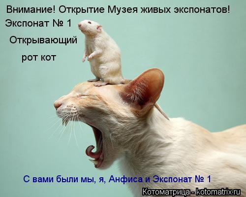 Котоматрица: Внимание! Открытие Музея живых экспонатов! Экспонат № 1 Открывающий рот кот С вами были мы, я, Анфиса и Экспонат № 1
