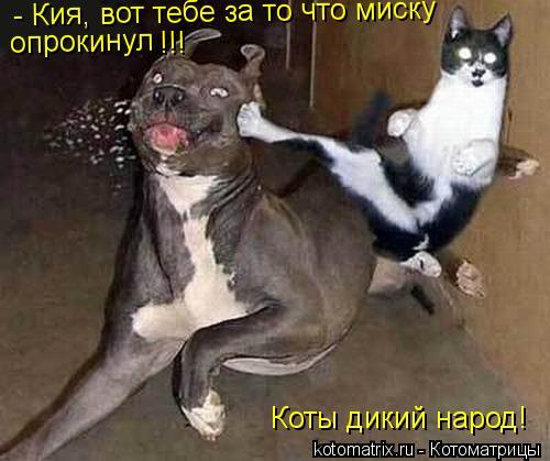 Котоматрица: - Кия, вот тебе за то что миску опрокинул !!! Коты дикий народ!