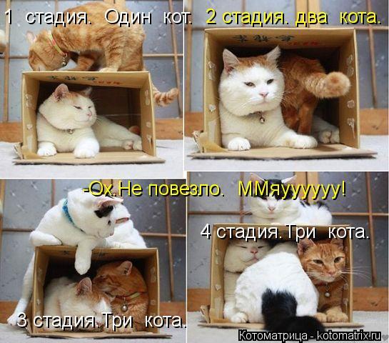Котоматрица: 1  стадия.  Один  кот. 2 стадия. два  кота. 3 стадия.Три  кота. 4 стадия.Три  кота. -Ох.Не повезло.  ММяуууууу!