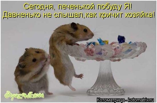 Котоматрица: Сегодня, печенькой побуду Я! Давненько не слышал,как кричит хозяйка!
