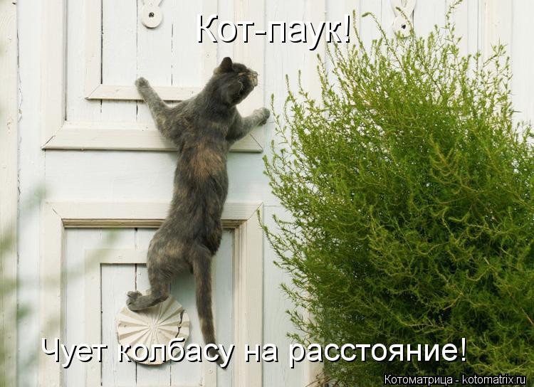 Котоматрица: Кот-паук! Чует колбасу на расстояние!