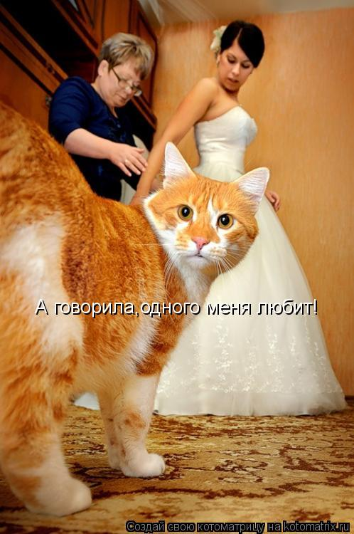 Котоматрица: А говорила,одного меня любит!