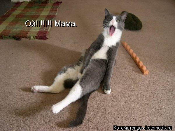 Котоматрица: Ой!!!!!!! Мама.