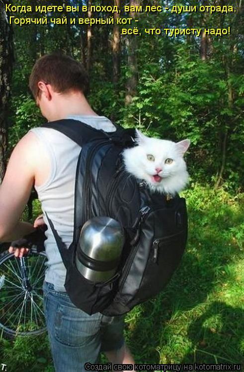 Котоматрица: Горячий чай и верный кот -  всё, что туристу надо! Когда идете вы в поход, вам лес - души отрада.