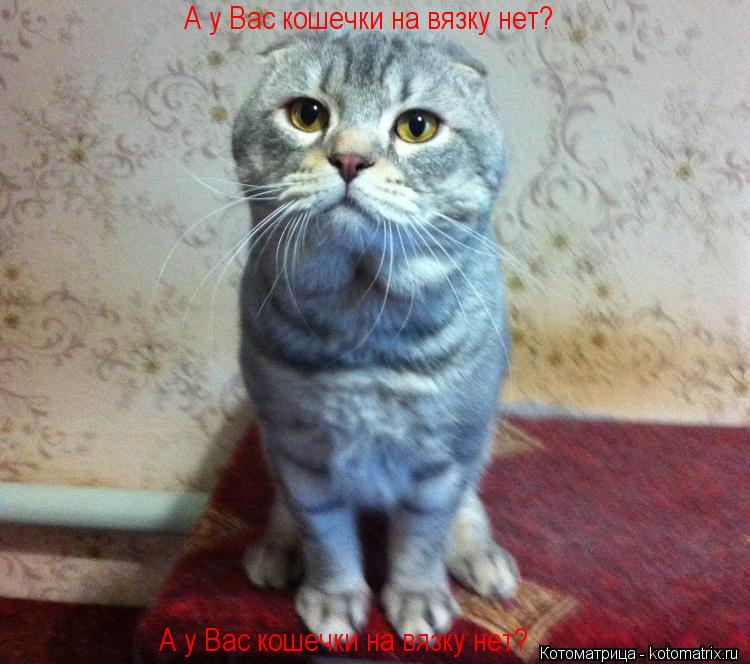 Котоматрица: А у Вас кошечки на вязку нет?  А у Вас кошечки на вязку нет?