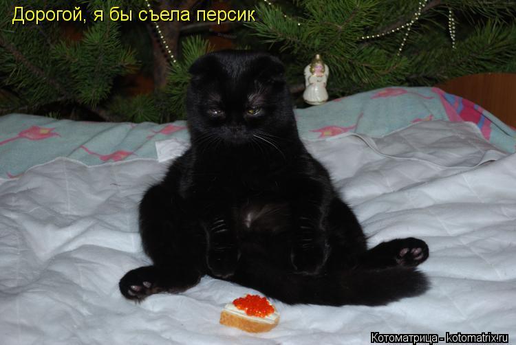 Котоматрица: Дорогой, я бы съела персик