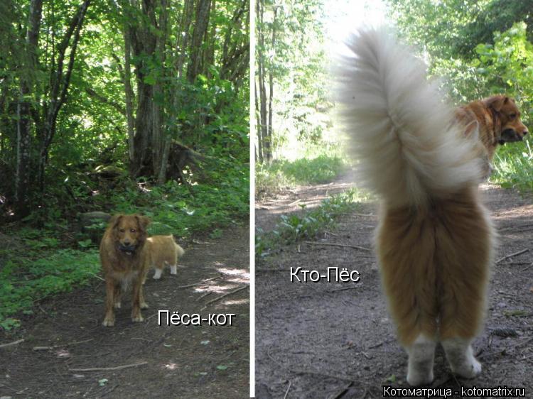 Котоматрица: Кто-Пёс Пёса-кот