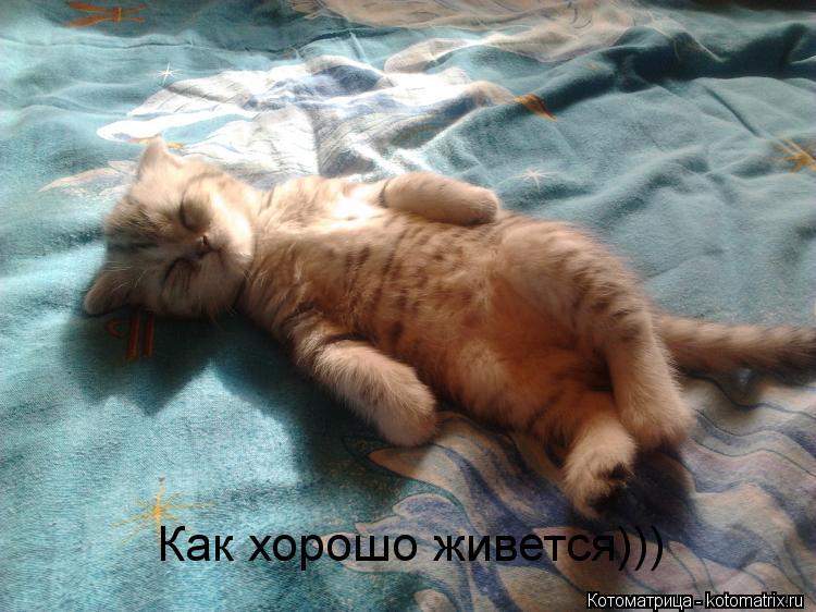 Котоматрица: Как хорошо живется)))