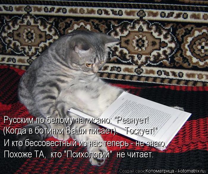 """Котоматрица: Русским по белому написано: """"Ревнует! Похоже ТА,  кто """"Психологий""""  не читает. (Когда в ботинки Ваши писает).   Тоскует!"""" И кто бессовестный из на"""