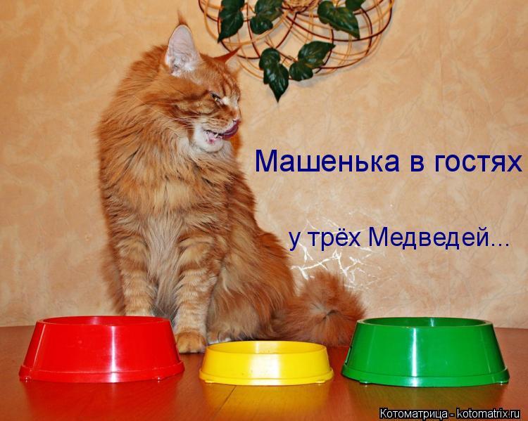 Котоматрица: у трёх Медведей... Машенька в гостях