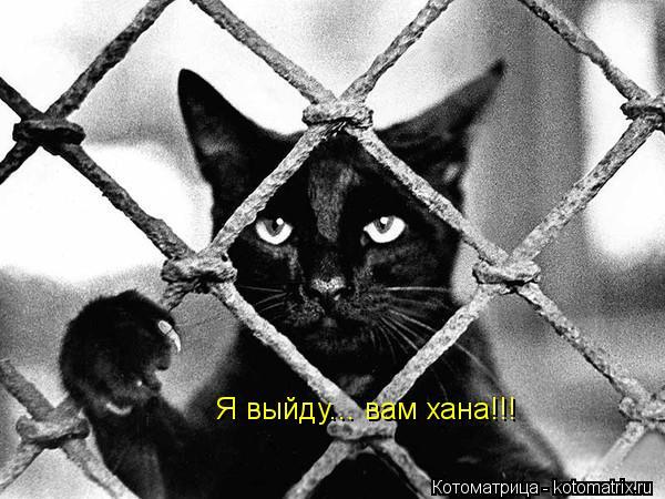 Котоматрица: Я выйду... вам хана!!!