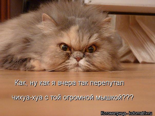 Котоматрица: Как, ну как я вчера так перепутал чихуа-хуа с той огромной мышкой??? Как, ну как я вчера так перепутал