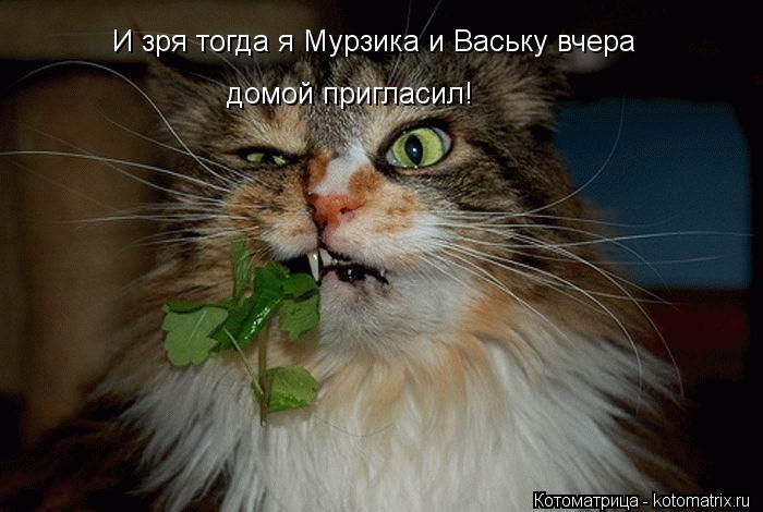 Котоматрица: И зря тогда я Мурзика и Ваську вчера  домой пригласил!