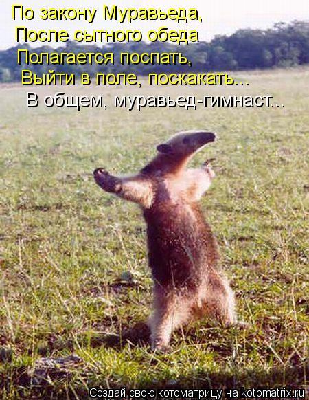 Котоматрица: По закону Муравьеда, После сытного обеда Полагается поспать, Выйти в поле, поскакать... В общем, муравьед-гимнаст...