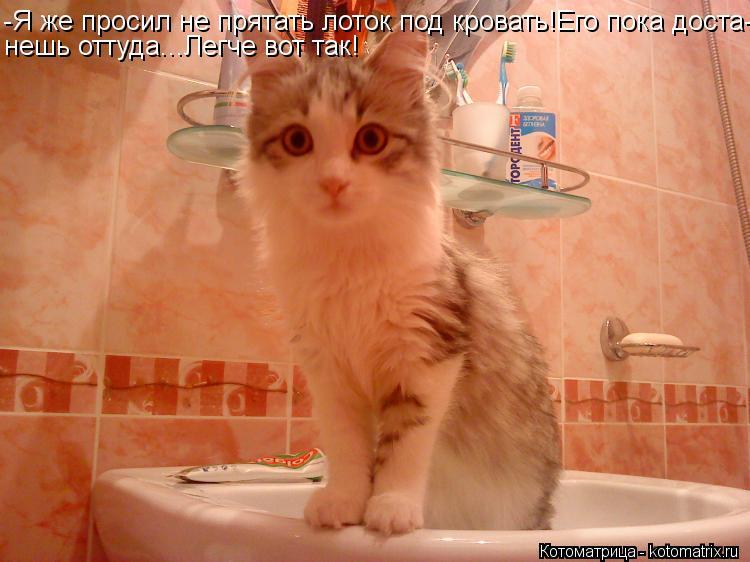 Котоматрица: -Я же просил не прятать лоток под кровать!Его пока доста- нешь оттуда...Легче вот так!