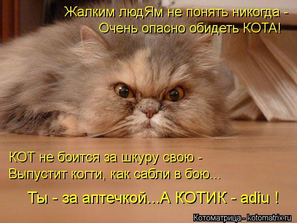 Котоматрица: Жалким людЯм не понять никогда -  Очень опасно обидеть КОТА! КОТ не боится за шкуру свою - Выпустит когти, как сабли в бою... Ты - за аптечкой...А