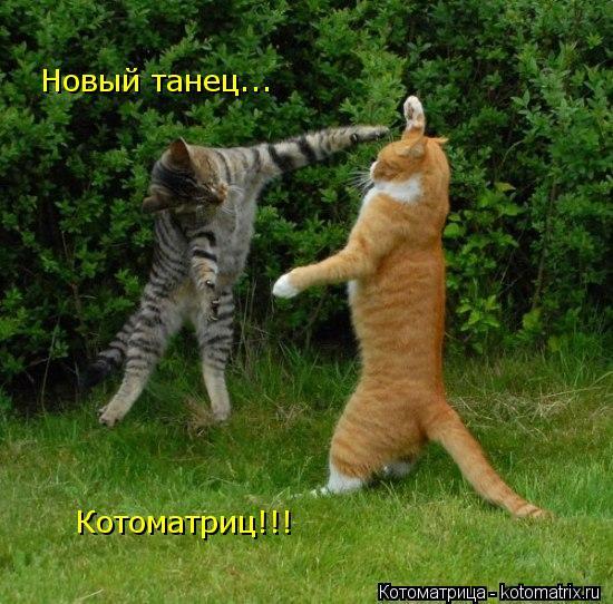 Котоматрица: Новый танец... Котоматриц!!!