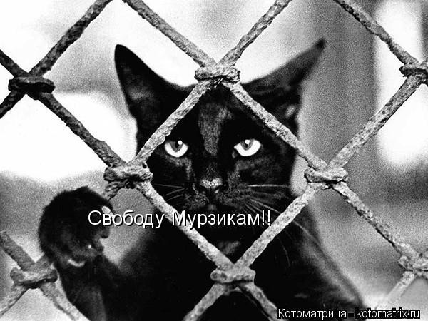 Котоматрица: Свободу Мурзикам!!