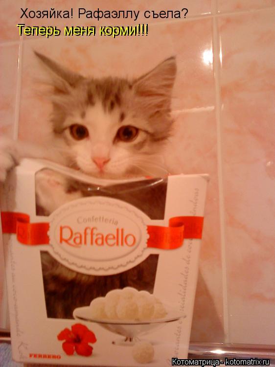 Котоматрица: Хозяйка! Рафаэллу съела? Теперь меня корми!!! Теперь меня корми!!!