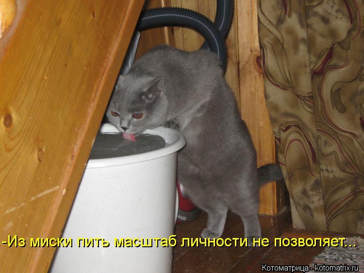 Котоматрица: -Из миски пить масштаб личности не позволяет...