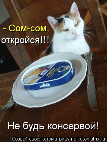 Котоматрица: - Сом-сом, откройся!!! Не будь консервой!