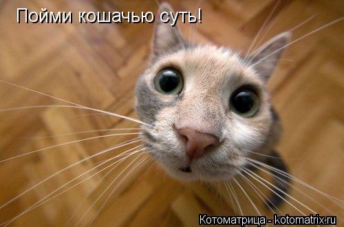 Котоматрица: Пойми кошачью суть!