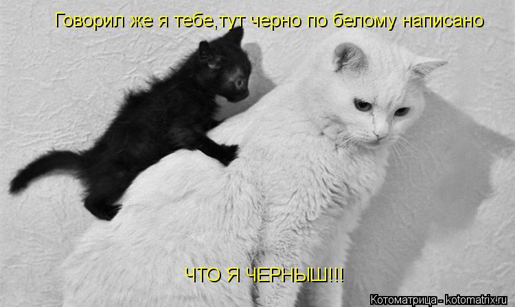 Котоматрица: Говорил же я тебе,тут черно по белому написано ЧТО Я ЧЕРНЫШ!!!