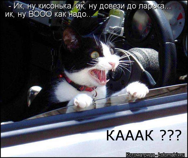 Котоматрица: - Ик, ну кисонька, ик, ну довези до ларька... ик, ну ВООО как надо... КАААК ???
