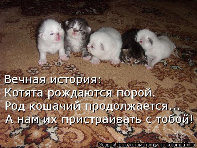Котоматрица: Вечная история: Котята рождаются порой. Род кошачий продолжается... А нам их пристраивать с тобой!