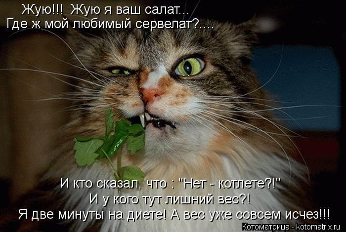 """Котоматрица: И кто сказал, что : """"Нет - котлете?!"""" И у кого тут лишний вес?! Где ж мой любимый сервелат?.... Жую!!!  Жую я ваш салат... Я две минуты на диете! А вес уж"""