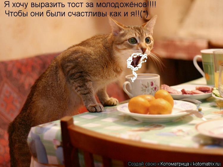 Котоматрица: Я хочу выразить тост за молодожёнов!!!! Чтобы они были счастливы как и я!!(*)